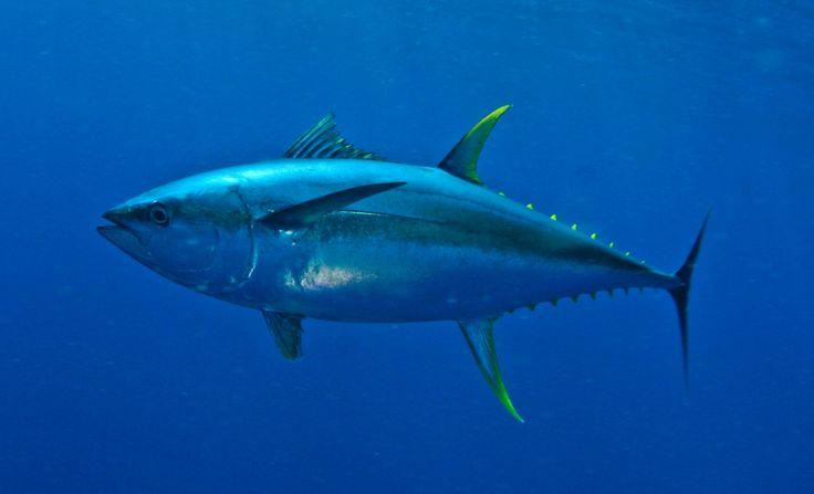 charter fishing fuengirola